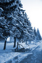 Free Winter Park Royalty Free Stock Photography - 3957617