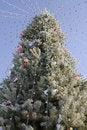 Free Christmas Holiday Stock Photos - 3959723