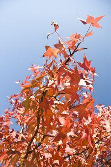 Free Orange Autumn Leaves Royalty Free Stock Images - 3951259