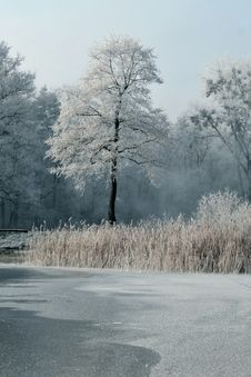 Free Frosty Day Royalty Free Stock Photography - 3951417