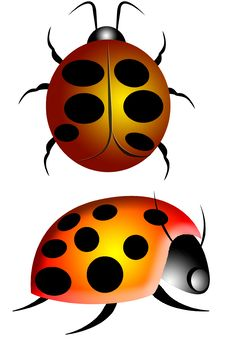 Free Lady Bug Or Ladybird 2 Stock Image - 3952281