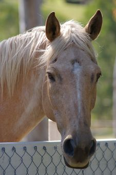 Free Friendly Horse Stock Photography - 3953662
