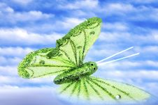Free Butterfly Stock Image - 3957381