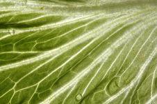 Free Slad Leaf Stock Image - 3957591