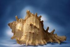 Free Sea Shell Stock Image - 3957781