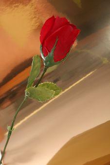 Rose Art Stock Photo