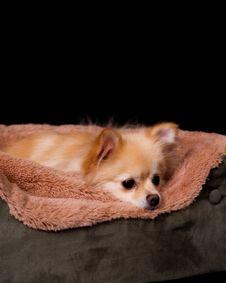 Free Ready For Sleep Pup Stock Photo - 3959820