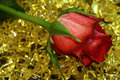 Free Nice Red Rose On The Yellow Stones Royalty Free Stock Image - 3965366