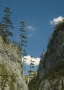 Free Trees On The Cliff Stock Photo - 3966290