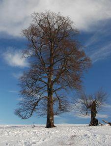 Free Winter Stock Image - 3960081