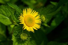 Free Wild Flower Royalty Free Stock Images - 3962059