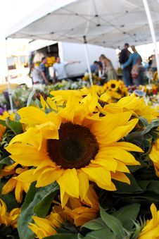 Free Sunflowers At The Market Royalty Free Stock Photos - 3962298