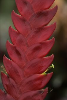 Free Bromeliads In Bloom Stock Image - 3962551