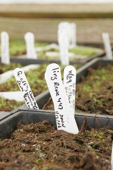Free Bromeliad Starts In A Greenhou Stock Image - 3962701