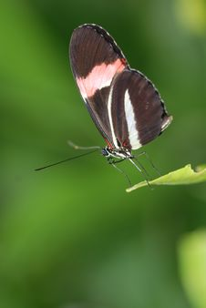 Free Butterfly Sat On A Leaf Stock Photos - 3964293