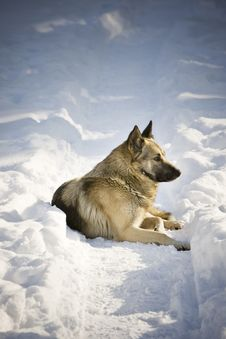 Free Dog In The Snow Royalty Free Stock Photos - 3964808