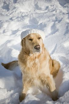 Free Dog With Hat Stock Photos - 3964893