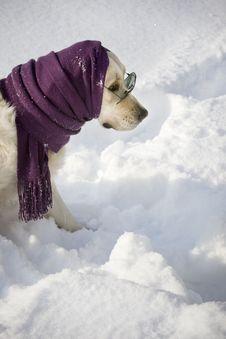Free Funny Dog Stock Image - 3965511