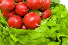 Free Fresh Red Radish On The Green Lettuce Stock Images - 3967104