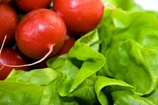 Free Fresh Red Radish On Green Lettuce Royalty Free Stock Photography - 3967107