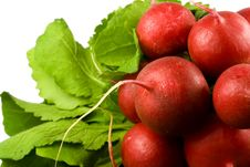 Free Bunch Of Radishes Royalty Free Stock Photos - 3967108