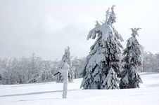 Free White Winter Landscape Royalty Free Stock Photos - 3967318