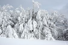 Free White Winter Landscape Royalty Free Stock Image - 3967326