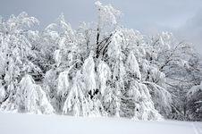 Free White Winter Landscape Royalty Free Stock Image - 3967326