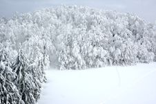 Free White Winter Landscape Stock Photography - 3967362