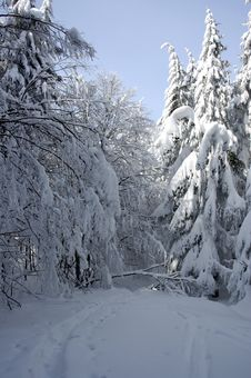 Free White Winter Landscape Stock Images - 3967374