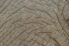 Free Grey Elephant Skin Stock Photo - 3968000