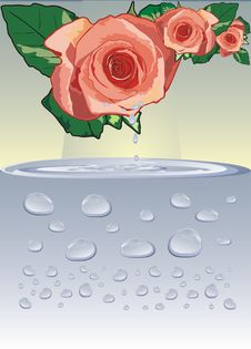 Free Rose And Drops Royalty Free Stock Images - 3968159