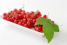 Free Red Currants With Leaf Royalty Free Stock Photo - 3968185