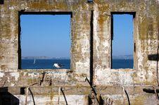 Free Alcatraz Bird In Frame Royalty Free Stock Photography - 3968897