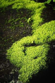 Free Moss001 Stock Photography - 3969382