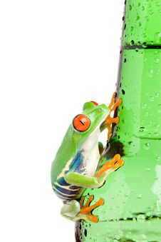 Free Red-eyed Tree Frog On Bottle Isolated Stock Image - 3969401