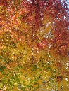 Free Autumns Here Stock Photography - 3976322