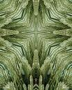 Free Icy Pine Needle Cross Stock Image - 3977711
