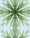Free Icy Pine Needle Cross 5 Stock Photo - 3977770