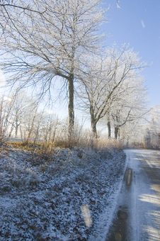 Free Winter Trees Stock Photography - 3970492
