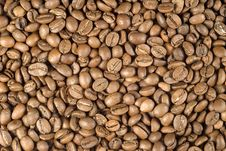 Free Coffee Beans Royalty Free Stock Photo - 3971095