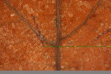 Free Dead Brown Leaf Veins Macro Stock Photography - 3972012