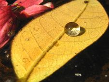 Free Leaf With A Droplet Stock Photography - 3972072