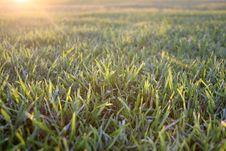 Free Fresh Lawn 1 Stock Photography - 3972192