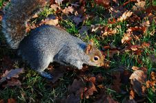 Free Squirrel Stock Photos - 3973743