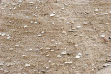 Sea Shells In The Sand Royalty Free Stock Image