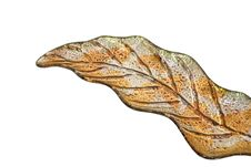 Free Leaf Plate Stock Photography - 3974992