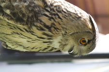 Free The Owl Stock Photography - 3975242