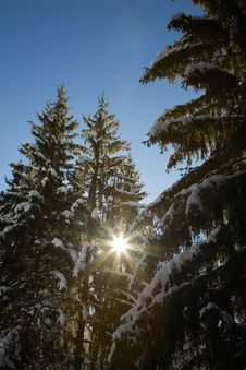 Free Snowy Woods Royalty Free Stock Photography - 3975357