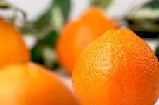 Free Clementine Oranges Stock Photo - 3975590